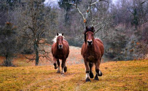 gambar kuda anak sd