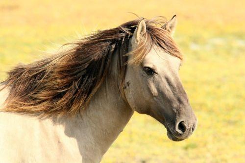 Gambar Kuda Terbaik Terbagus Terpopuler