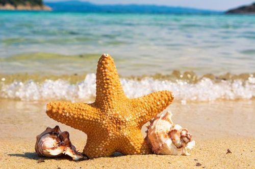 Gambar bintang laut paling indah
